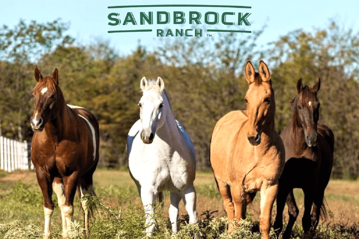 sandbrock-for-new-site